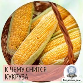 к чему снится кукурузное поле