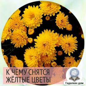 желтые цветы во сне