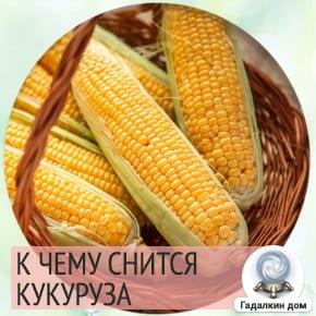 Сонник: кукуруза