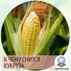 к чему снится кукуруза в початках