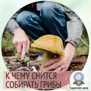 Сонник: собирать грибы