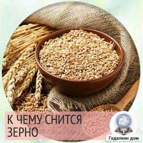 к чему снится зерно пшеницы