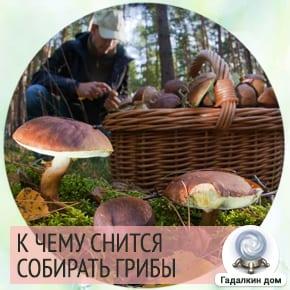 к чему снится грибы собирать в лесу