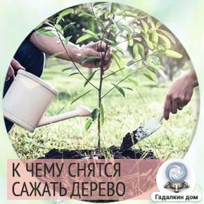 сонник посадить дерево