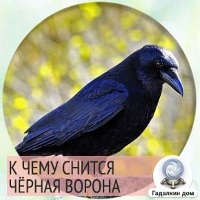 к чему снится черная ворона
