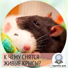 видеть во сне крысу живую