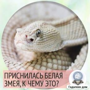к чему снятся белые змеи