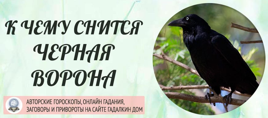 К чему снится чёрная ворона