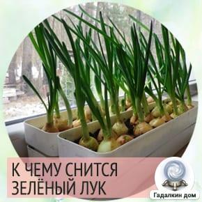 к чему снится зеленый лук