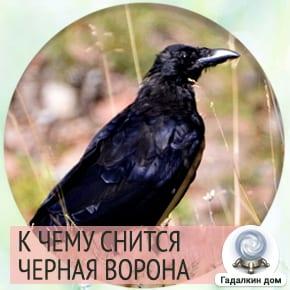 Сонник: черная ворона