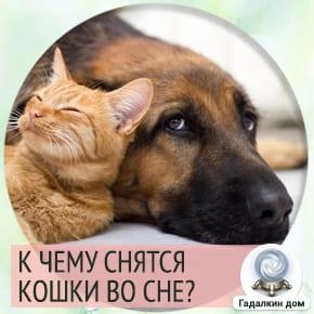 к чему снятся кошки и собаки вместе