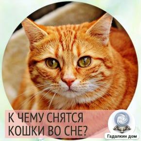 к чему снится кошка рыжая