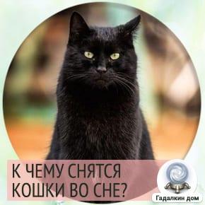 к чему снится кошка черная