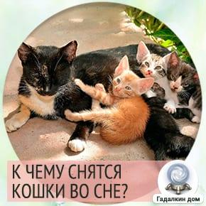 К чему снятся котята и кошки женщине?