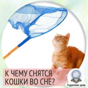 сонник ловить кошку