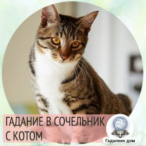 Гадание в сочельник с котом в домашних условиях.