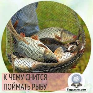 сонник поймать рыбу на удочку