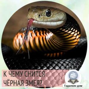 к чему снится большая черная змея