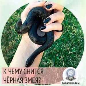 Сонник: чёрная змея