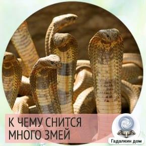 Сонник: много змей