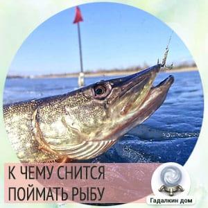 к чему снится поймать большую рыбу