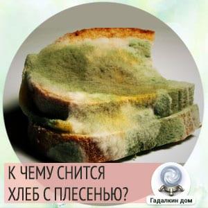 Сонник: плесень на хлебе