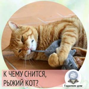 Сонник: рыжий кот