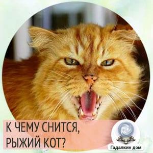 к чему снится большой рыжий кот