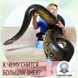 Сонник: большая змея