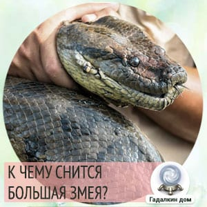 к чему снится большая змея мужчине