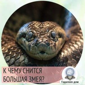 к чему снится змея большая и толстая