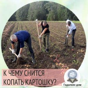 к чему снится копать картофель