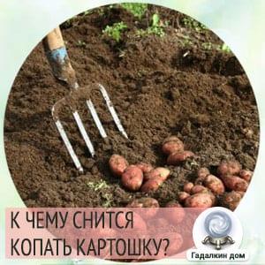 копать картошку во сне к чему снится