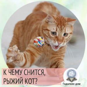 к чему снится рыжий кот женщине
