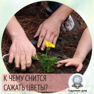 Сонник: сажать цветы