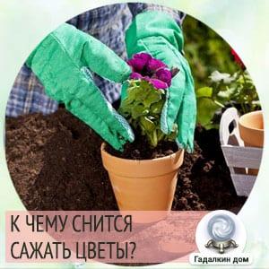 сонник сажать цветы в землю
