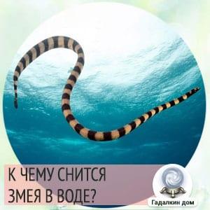 Сонник: змея в воде