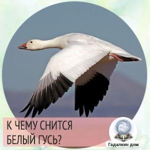 сонник гуси белые