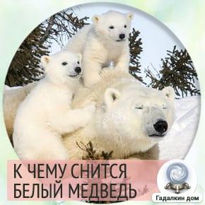 к чему снится белый медведь женщине