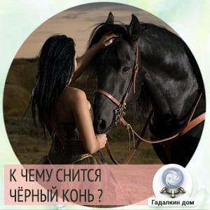 черный конь во сне