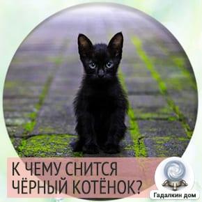 сон черный котенок