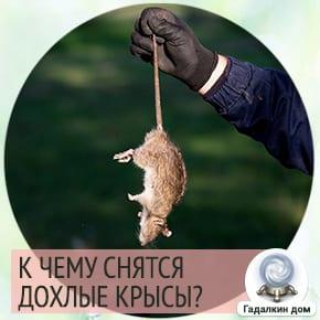 дохлая крыса во сне к чему это