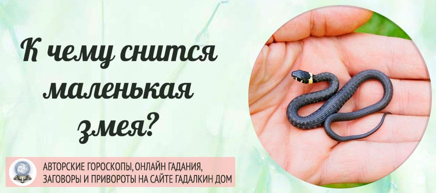 К чему снится маленькая змея
