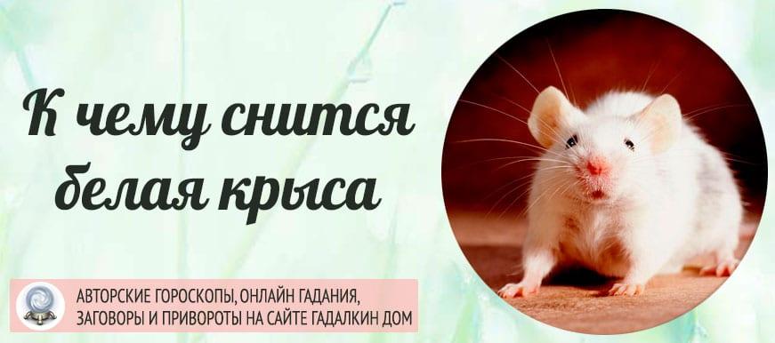 К чему снится белая крыса
