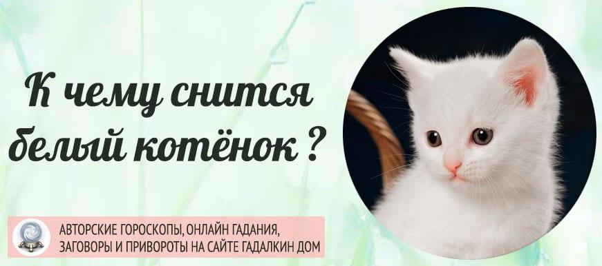 К чему снится белый котёнок