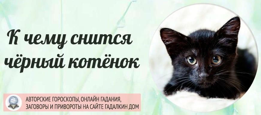 К чему снится чёрный котёнок