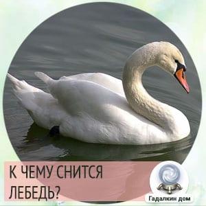 к чему снится лебедь