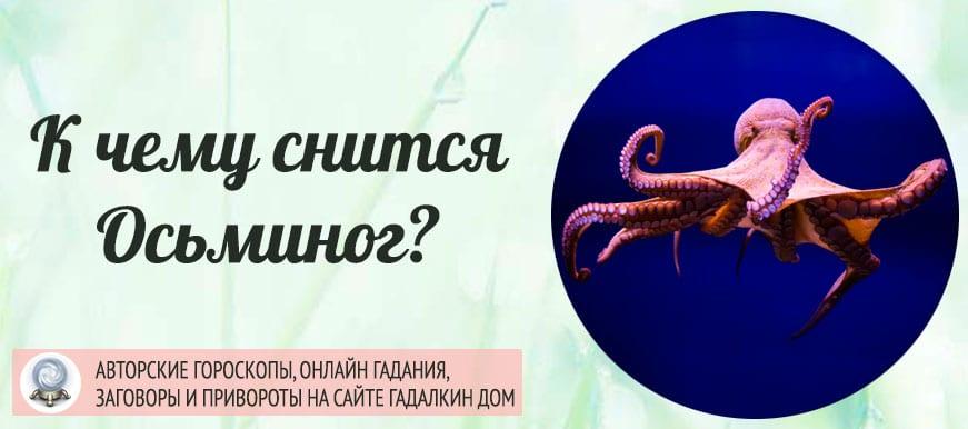 К чему снится осьминог