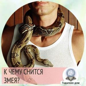 змея к чему снится мужчине