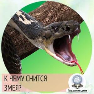 во сне видеть змей к чему это